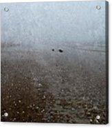 Seashells On Foggy Beach Acrylic Print