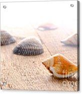 Seashells On Wood Dock Acrylic Print