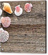 Seashells On Wood Acrylic Print