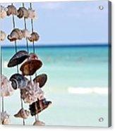 Seashells Acrylic Print by Sophie Vigneault