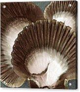 Seashells Spectacular No 22 Acrylic Print by Ben and Raisa Gertsberg