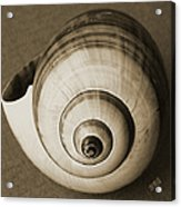 Seashells Spectacular No 25 Acrylic Print by Ben and Raisa Gertsberg