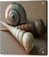 Seashells Spectacular No 29  Acrylic Print by Ben and Raisa Gertsberg