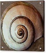 Seashells Spectacular No 34 Acrylic Print
