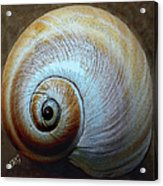 Seashells Spectacular No 36 Acrylic Print