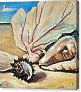 Seashore Shell Still Life Acrylic Print