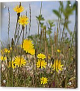 Seaside Flora Acrylic Print