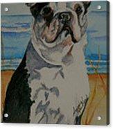 Seaside Harold Acrylic Print