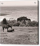 Seaside Horses Acrylic Print by Olivier Le Queinec