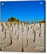 Seaside Sand Dunes Acrylic Print