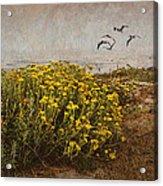Seaside Sun Acrylic Print