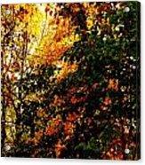 Season Of Color Acrylic Print