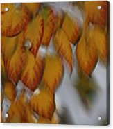 Seasonal Shiver Acrylic Print