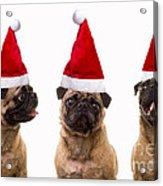 Seasons Greetings Christmas Caroling Pug Dogs Wearing Santa Claus Hats Acrylic Print