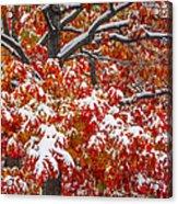 Seasons Of Change Acrylic Print