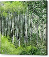 Seasons Of The Aspen Acrylic Print
