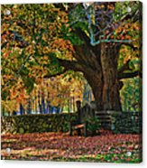 Seated Under The Fall Colors Acrylic Print
