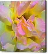 Seattle's Rose Acrylic Print
