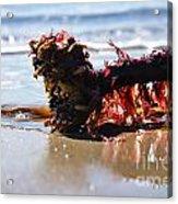 Seaweed 2 Acrylic Print