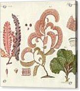 Seaweed Different Kinds Acrylic Print