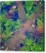 Seaweed Variety Acrylic Print