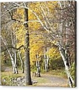 Secluded Lake Road Acrylic Print