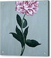 Second Spring Peony Acrylic Print