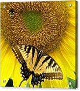 Secret Lives Of Sunflowers Acrylic Print