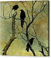 Secretive Crows Acrylic Print