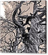 Sedona Arizona Ghost Tree In Black And White Acrylic Print
