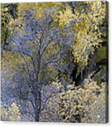 Sedona Fall Color Acrylic Print