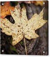 Sedona Leaf 12 Acrylic Print