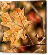 Sedona Leaf 14 Acrylic Print