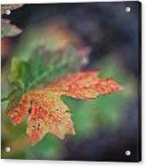 Sedona Leaf 20 Acrylic Print