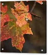 Sedona Leaf 25 Acrylic Print