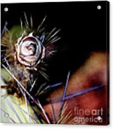 Sedona's Desert Rose Acrylic Print