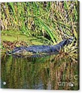 See You Later Acrylic Print by Mel Steinhauer