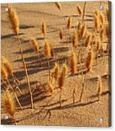 Seed And Sand Acrylic Print
