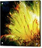 Seedburst Acrylic Print