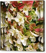 Seeing Double - Hydrangeas Acrylic Print