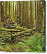 Seeing Forest Through The Trees Acrylic Print