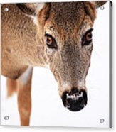 Seeing Into The Eyes Acrylic Print