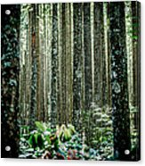 Seeing The Forest With The Trees Acrylic Print