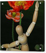 Seeking A Yellow Brick Road Number One Poppy  Acrylic Print