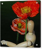 Seeking A Yellow Brick Road Poppy Number Two Acrylic Print