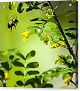 Seeking Nectar Acrylic Print