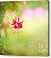Seeking The Light Acrylic Print by Beve Brown-Clark Photography