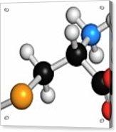 Selenocysteine Amino Acid Molecule Acrylic Print