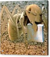 Sem Of Ant Holding A Microchip Acrylic Print