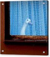 Sembach Window Acrylic Print